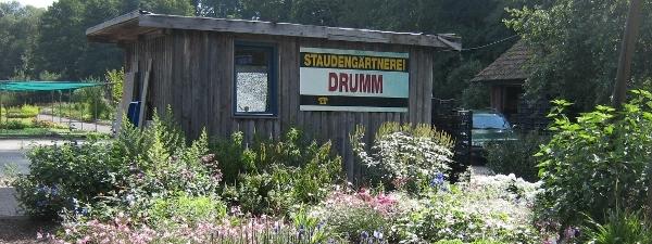 stauden-drumm08